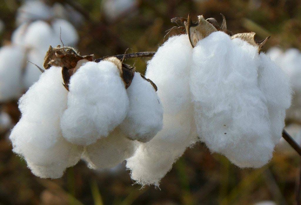 L'obiettivo-della-sostenibilità-–-Perché'-conviene-usare-gli-asciugamani-di-cotone
